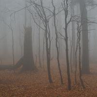Bukový skoro prales