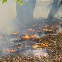 Hořící les aneb zakazované a všude provozované vypalování