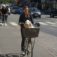 Kodaň - cyklisté všude