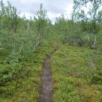 Cestička z Kvikkjokku na Tsielekjåkku