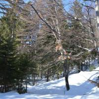 Les pod náhorní planinou Raxu