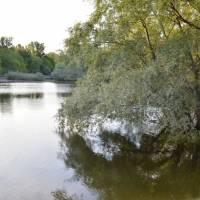 Povodňový lužní les na soutoku Dunaje a Moravy
