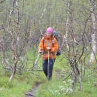 Údolí Nordalen a březový prales