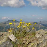 Kytky v pohoří Dešat