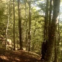Výstup na hřeben Zelengora od Sutjesky - v pralese