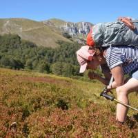 Zelengora: borůvkové hody na hlavním hřebenu