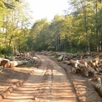 Zelengora: těžba těsně na hranice národního parku Sutjeska