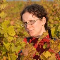 Janča ve vinici