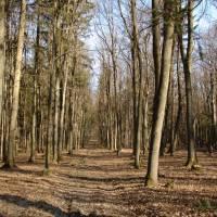 V lese nad Starou Myjavou