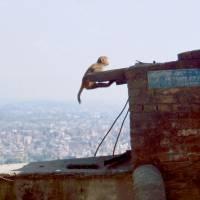 Opice nad Káthmándú
