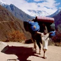 Na prašné cestě, jak a vpravo hora Ama Dablam