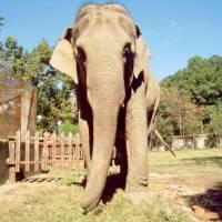 Káthmándú, Patán, slon se prochází po ZOO