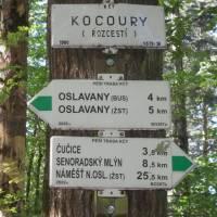 Kocoury