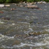 Řeka Oslavka