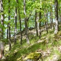 Řídký les u hradu Lamberk