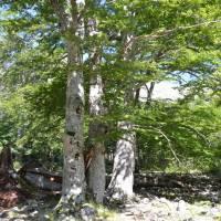 Stromy u vodopádů de Anglais