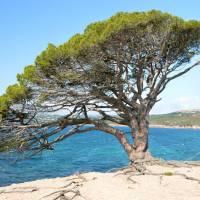 Pláž Asciaghju (hned vedle nejznámější pláže Palombaggia)
