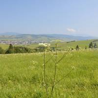 Oravská Magura: Ze sedla Prislop