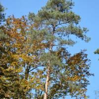 Kohoutovický les