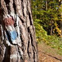 Kohoutovický les - dávné běžecké značky