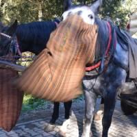 Krmení koníků, které vozí turisty na Morskie oko