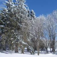 Čerstvě napadlý sníh u Fryšavské hájovny