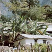 Vesnice s banánovníky
