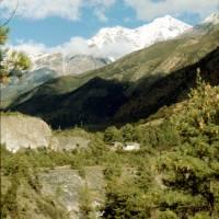 Jehličnatý les, vzadu Chhulu (6580 m)