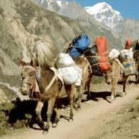 Karavana oslů/mezků