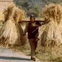 U Bhaktapúru: nosič sena