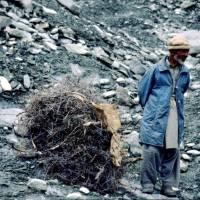 Na ledovci Bualtar, děda s dřívím