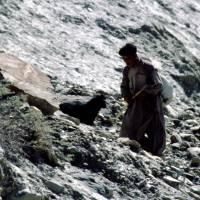 Hoper: domorodý pastevec