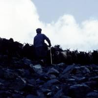 údolí Burji Nala, pastevec ráno vyhání stádo