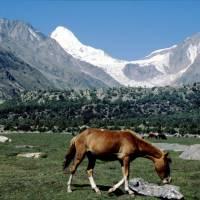 Rupal: Lailli Peak s koněm