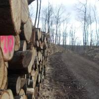 Dřevo, dřevo, dřevo