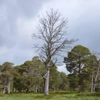 Cairngorm,  v údolí Glen Derry
