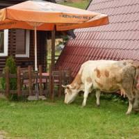 Bogë, turistické letovisko kosovského Prokletije, v restauraci