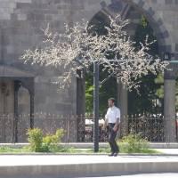 Erzurum, umělý strom