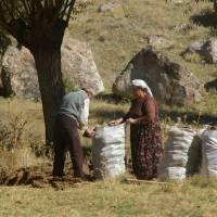 Kapadocie, Ihlarské údolí, sbírání trusu na otop