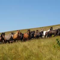 Mavrovo, koně