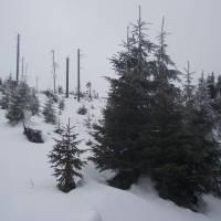 Na hřebenu Kral. Sněžníku (Stříbrnické)