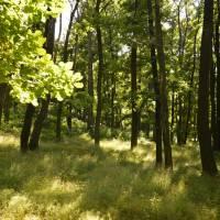V lese pod hradem Gymeš