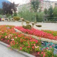 Meráno, květinový záhon