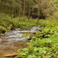 Pěkný potok (Wunderbach)