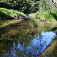 parádní řeka Křinice (zde tvoří dlouhý hraniční úsek Sasko-ČR)